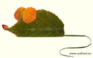 autumn1-26.jpg