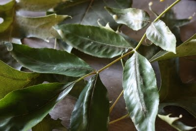 гербарий растений