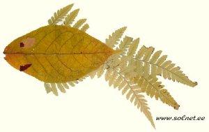 autumn1-27.jpg